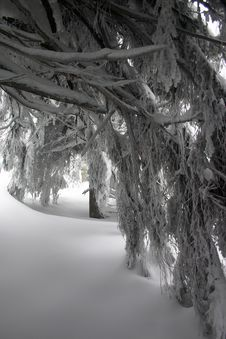 Free Snow Royalty Free Stock Images - 3748989