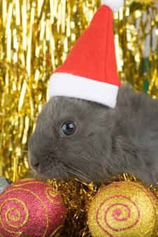 Free Grey Bunny And Christmas Decorations Stock Photography - 3749132