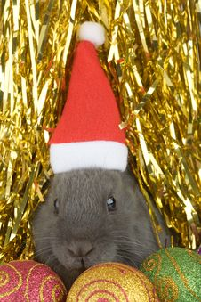 Free Grey Bunny And Christmas Decorations Stock Photos - 3749153
