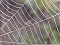 Free Spider S Web With A Drops Stock Images - 3750404