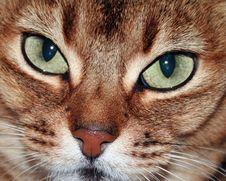 Free Cat Close Up Royalty Free Stock Photo - 3750295