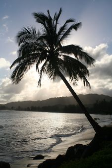 Free Silhouette Of A Palm Tree. Royalty Free Stock Photography - 3750407