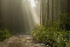Free Morning In The Forest Stock Photos - 3752393