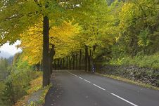 Free Multi-coloured Autumn Stock Image - 3754981