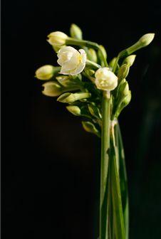 Free Yellow Flower Royalty Free Stock Photos - 3755238