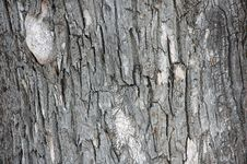 Free Bark Of Old Tree. Royalty Free Stock Photography - 3755507