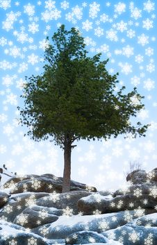 Free Alone Tree Grow Over Blue Sky On Stone Stock Photo - 3757940