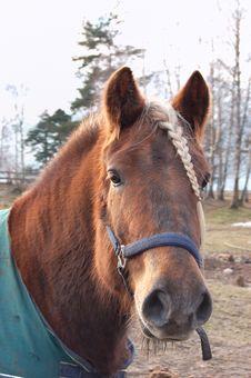 Free Horse Royalty Free Stock Photo - 3759135