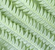 Free Fern Stock Photo - 3759410