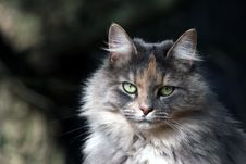 Free Cat Royalty Free Stock Image - 3759906