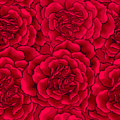Free Dark Red Roses Heart Seamless Stock Photos - 37536413