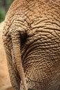 Free Elephant Tail Stock Photo - 3763230