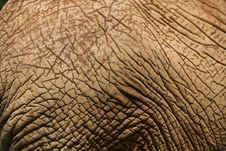 Free Elephant Skin 1 Stock Images - 3760354