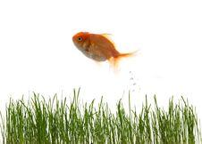 Free Grass And Fish Stock Photo - 3761330