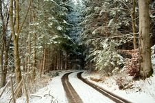 Free Winter Forest Lane Stock Images - 3763404