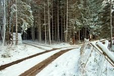 Free Winter Forest Lane Royalty Free Stock Photography - 3763407
