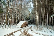 Free Winter Forest Lane Royalty Free Stock Images - 3763409