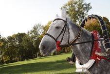 Free The Grey Horse Stock Images - 3765034