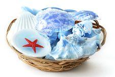 Free Sea Shells Stock Photos - 3765193