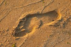Free Footprint On A Beach Royalty Free Stock Image - 3765316