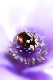 Free Love Bugs Royalty Free Stock Image - 3765336