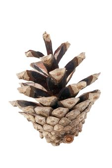 Free Pinecone Over White Background Stock Images - 3765414