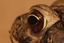 Free A Toad S Eye View Royalty Free Stock Photography - 3765617
