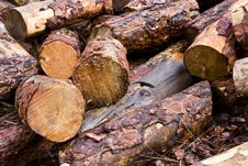 Free Bunch Of Logs Royalty Free Stock Photography - 3765927
