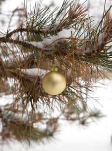 Free Gold Christmas Ornament Stock Image - 3766071