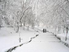Free Snowy Parkland Stock Image - 3767781