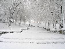 Free Snowy Parkland Stock Photography - 3767782