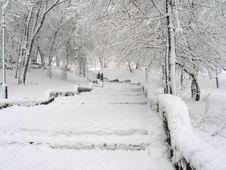 Free Snowy Parkland Royalty Free Stock Photo - 3767785