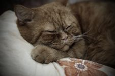 Free Sleeping Cat Stock Photography - 3769752
