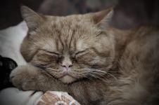 Free Sleeping Cat Stock Images - 3769804