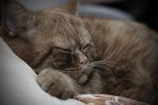 Free Sleeping Cat Royalty Free Stock Image - 3769806