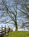 Free Trees In Meadow Stock Photo - 3778030