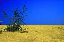 Free Plant In Desert Stock Photography - 3770572