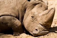 Free Muddy Rhino Stock Image - 3772581