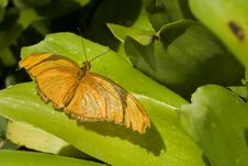 Free Orange Butterfly Stock Images - 3772844