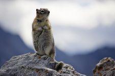 Free Mountain Squirrel Stock Photos - 3774963