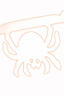 Free Spider Royalty Free Stock Image - 3776136