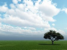 Free Green Tree Royalty Free Stock Photo - 3777065