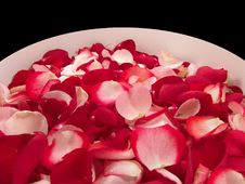 Free Beautiful Red Roses Petal On A Big Bowl Stock Photography - 3777152