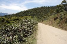 Free Road Through Bush, Guatemala Royalty Free Stock Photography - 3777177