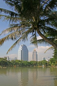 Free Tropical Park And Office Blocks Royalty Free Stock Photography - 3777337