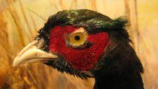 A Head Of Bird Stock Image