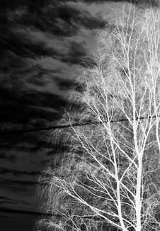 Free Bare Tree Royalty Free Stock Images - 3778909