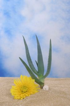 Free Aloe Plant Stock Images - 3779144