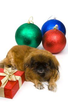 Free Holiday Dog Royalty Free Stock Photography - 3782467
