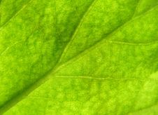 Free Leaf Texture 3 Stock Images - 3784254